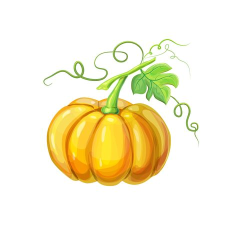 realistic Orange big ripe pumpkin with stem, green leaves and curly tendrils isolated on white. beautiful hand drawn autumn Halloween or thanksgiving pumpkin.detailed bright pumpkin in cartoon style Reklamní fotografie