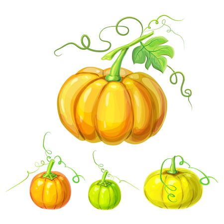 collection of realistic ripe pumpkins with stem, green leaves, curly tendrils isolated on white. beautiful hand drawn autumn halloween or thanksgiving pumpkins set.detailed pumpkins in cartoon style.