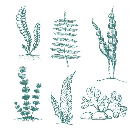 ink hand drawn seaweed collection. various underwater sea plants and algae. Vintage collection of engraved marine plants and seaweed. Aquarium plants collection. sketch silhouettes of algae.