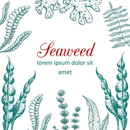 hand drawn seaweed frame illustration. Vintage background with underwater natural elements. Wedding or ad template design with drawn seaweeds, corals and reef. Vintage seaweed collection