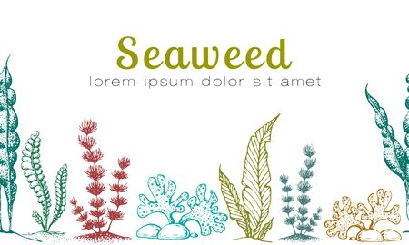 horizontal seamless seaweed banner. vintage background with engraved seaweeds, corals and reef. underwater natural hand drawn elements. Wedding or ad template design. Vintage seaweed collection