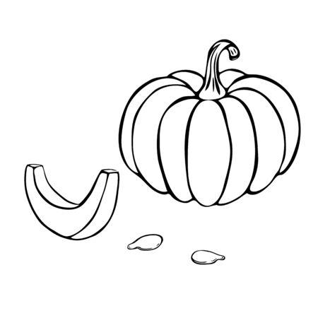 pumpkin or squash outline illustration isolated on white background. pumpkin icon. vintage hand drawn pumpkin sketch.