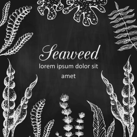 seaweed banner or frame on chalkboard. vintage blackboard with chalk drawn seaweeds corals and reef. underwater natural hand drawn elements. Vintage seaweed collection. banner template design.