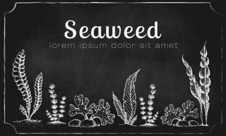 horizontal banner template with drawn seaweeds on chalkboard. vintage background with engraved seaweeds corals and reef on blackboard. underwater hand drawn elements. Vintage seaweed collection
