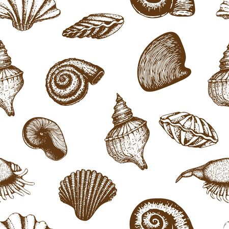 seamless seashell pattern isolated on white. vintage Hand drawn background of various beautiful engraved mollusk marine shells. Realistic sketch of cockleshell like conch, oyster, clam, scallop.