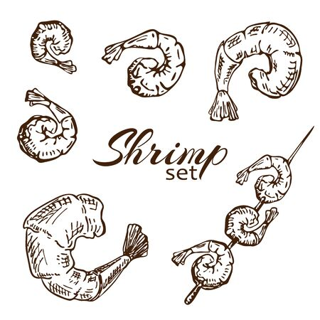vector Hand drawn engraved shrimp or prawn illustration isolated on white background. Outline sketch of roasted seafood. Grilled shrimp skewers in vintage style collection. Tasty cooked fried prawns
