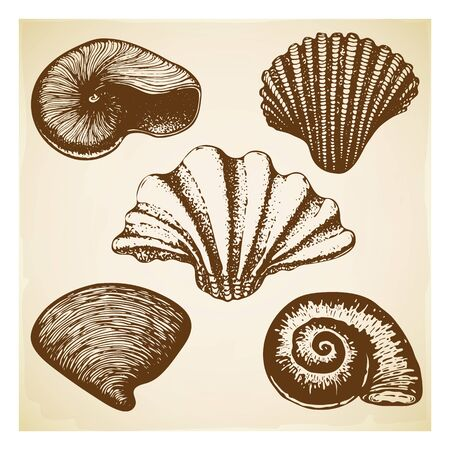vintage Hand drawn seashell collection. Set of various beautiful engraved mollusk marine shells on retro textured background. Realistic sketch of cockleshell like conch, oyster, spiral, clam, scallop.