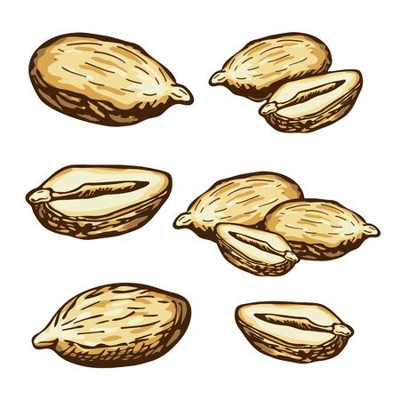hand drawn vector peanuts collection. engraved colorful peanuts seeds in retro vintage style isolated on white background. organic snack. bar or pub food, beer appetizer. Peanut butter food ingredient