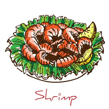 hand drawn boiled prawn or shrimp with lettuce and lemon slices isolated on white background. Colorful sketch drawing of seafood. king Shrimps served on white plate.Tasty cooked fried pile of prawns.