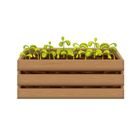 young seedlings of vegetables or flowers in garden crate isolated on white background. plant sprouts in wooden box. green shoots in fertile soil vector illustration. springtime gardening, farming