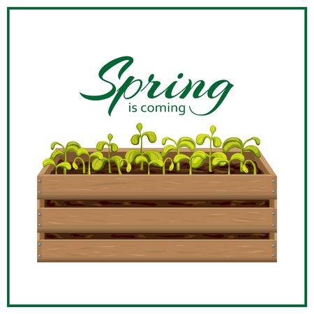 spring banner template with young seedlings of vegetables or flowers in garden crate isolated on white. plant sprouts in wooden box. green shoots in fertile soil vector illustration. springtime poster