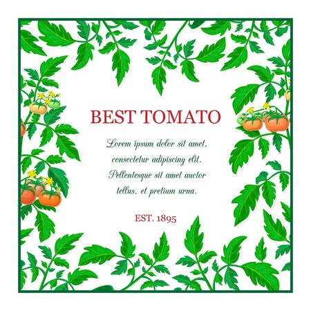 vector label or banner with red ripe tomato fruits, green leaves. square tomato composition with branches, fruits, yellow flowers and place for text. fresh vegetable frame. organic healthy food banner