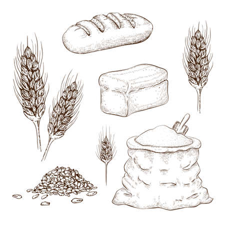 hand drawn breads, flour bag and wheatears set isolated on white. sketch illustration of square whole grain bread, wheat long loaf, rye spikelets, grains and burlap sack of flour. bakery goods.