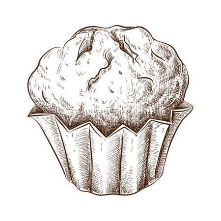 Hand drawn muffin isolated on white. Sketch of fresh baked muffin in vintage style. engraved pastry illustration. Sweet dessert pie or cookie ink drawing for label, logo, bakery menu, posters design.