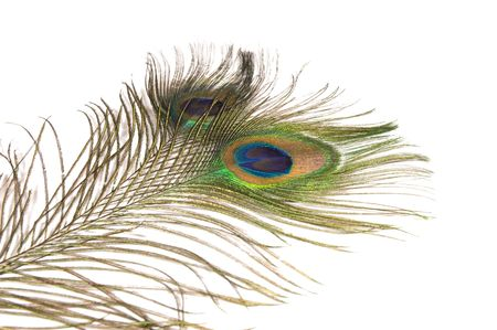 blue green background: Two peacock feathers on white background