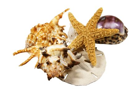 Composition of tropical sea shells and a star fish Stock Photo