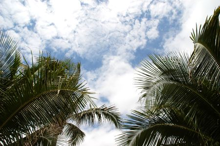 Crowns of two palm trees and cloudy blue sky photo