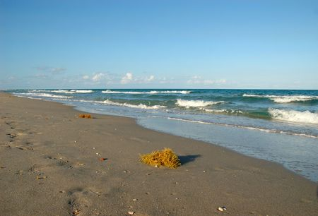 Yellow seaweed on a florida sandy beach before sunset Stock Photo - 3242542
