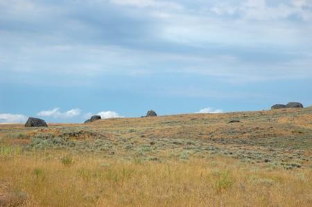 sagebrush: Sagebrush steppe of Western Washington