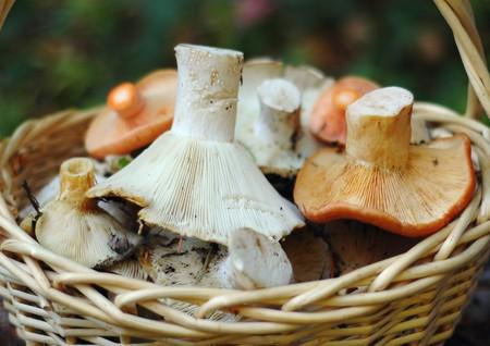 torminosus: Basket of wild mushrooms Stock Photo