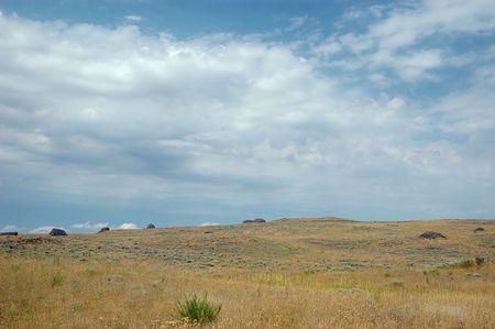 sagebrush: Sagebrush steppe of Eastern Washington