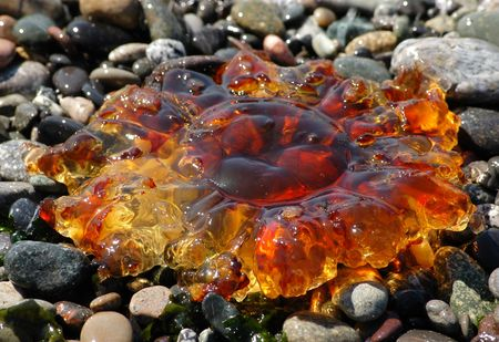 Amber colored jellyfish on a pebble bed photo