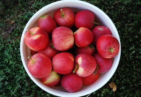 A white bucket full of gala apples on a green grass, view from above Фото со стока