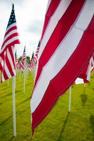 American flags on a green lawn on Memorial Day photo
