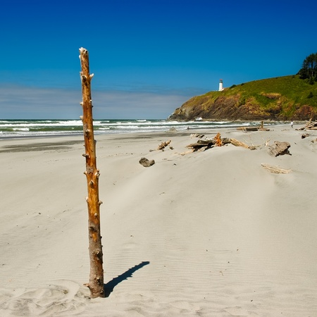 disappointment: Vertical driftwood at Benson Beach with North Head lighthouse on background, Cape Disappointment State Park, Washington