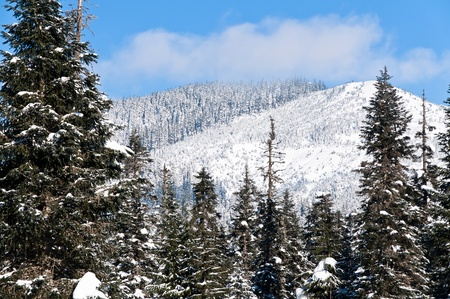 Snow covered trees with a top of a mountain and blue sky on background photo