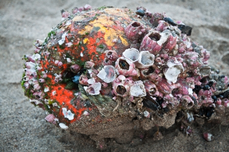barnacles: Old buoy covered with barnacles washed away on the beach
