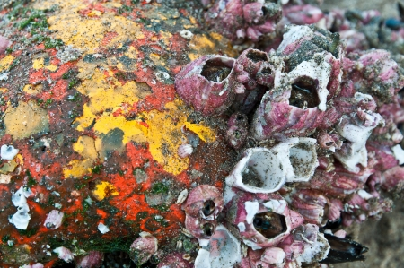 barnacles: Close-up of old buoy covered with barnacles washed away on the beach