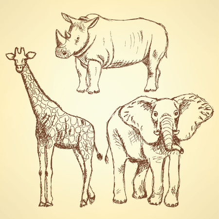 Sketch giraffe, elephant, rhino, vector vintage background Vector
