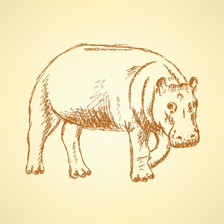 Sketch hippo, vector vintage background  Vector