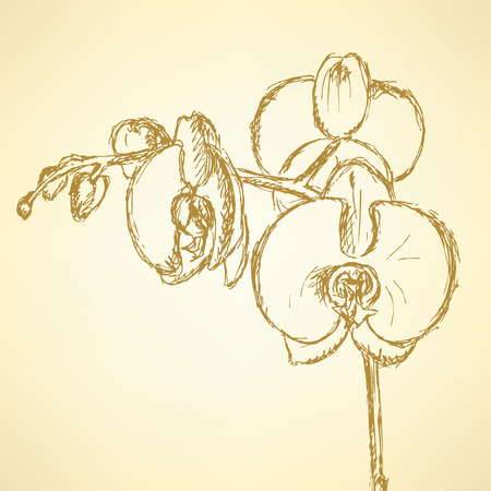 Sketch orchid, vector vintage background  Vector