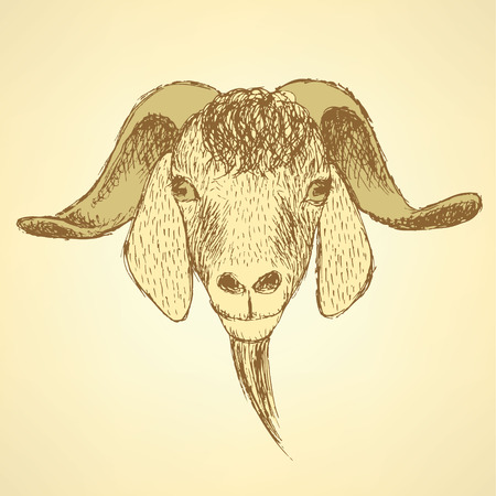 goat head: Sketch cute goat head in vintage style, background
