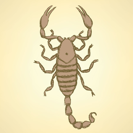 Sketch horrible scorpion in vintage style, background Vector