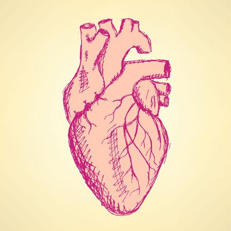 Sketch human heart in vintage style, vector Valentine background Vector