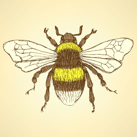 bees: Sketch bumble bee in vintage style