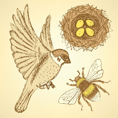 Sketch set with sparrow, bee and nest in vintage style, vector