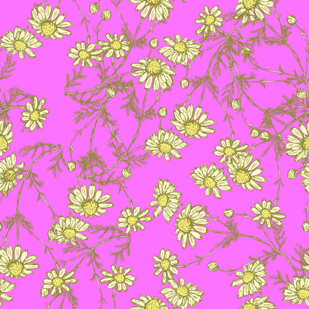 Daisy flower in sketch style, vector seamless pattern Vector