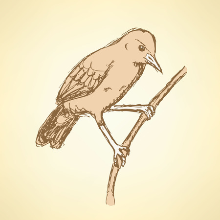 ornithological: Sketch rufous hornero bird in vintage style, vector