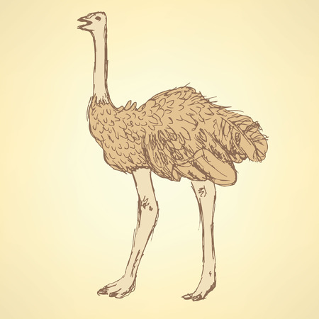 Sketch cute ostrich in vintage style, vector Vector