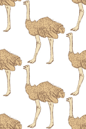 Sketch cute ostrich in vintage style, vector seamless pattern Vector
