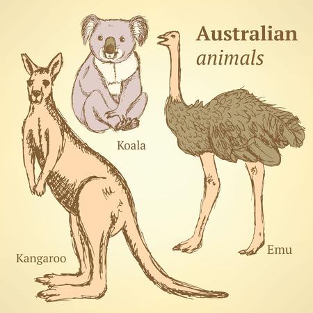 australian animal: Animales australianos de croquis en el estilo vintage, vector