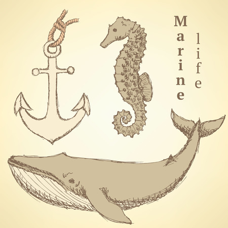 Sketch seahorse, whale and anchor in vintage style, vector Vector