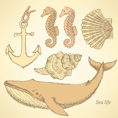 Sketch sea creatures in vintage style, vector Vector