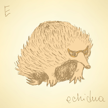 echidna: Sketch cute echidna in vintage style, vector Illustration