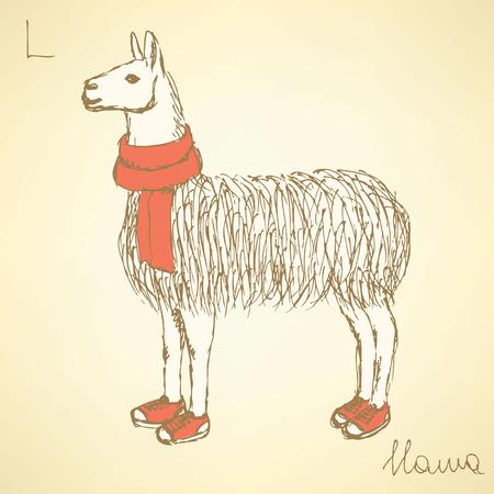 llama: Sketch fancy llamal in vintage style, vector Illustration
