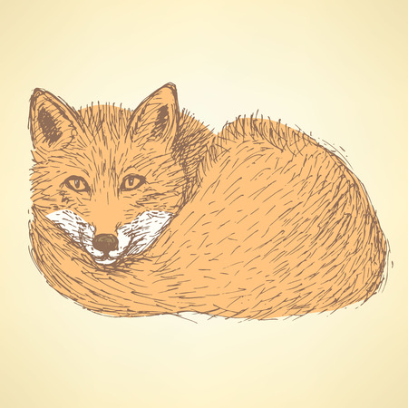 Sketch cute fox in vintage style, vector Vector